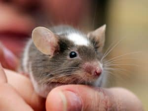 Child with mouse in her hand 732x549 thumbnail